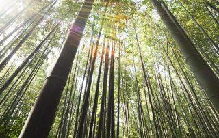 thoriumaplus-bambus