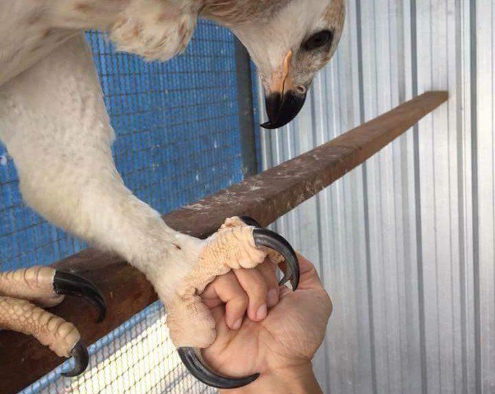 Veličina kandži predatora u odnosu na ljudsku ruku