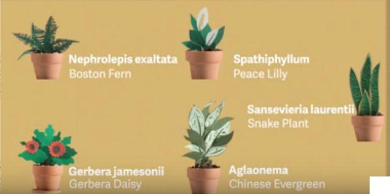 thoriumaplus-nasa-biljke-zrak