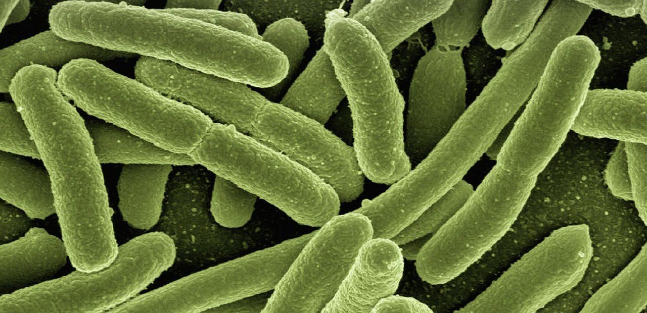 coli-bakterija-thoriumaplus