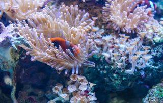 thoriumaplus-koralji