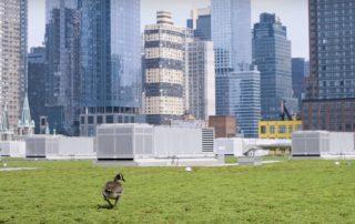 thoriumsoftwareaplus-zeleni-krov-new-york