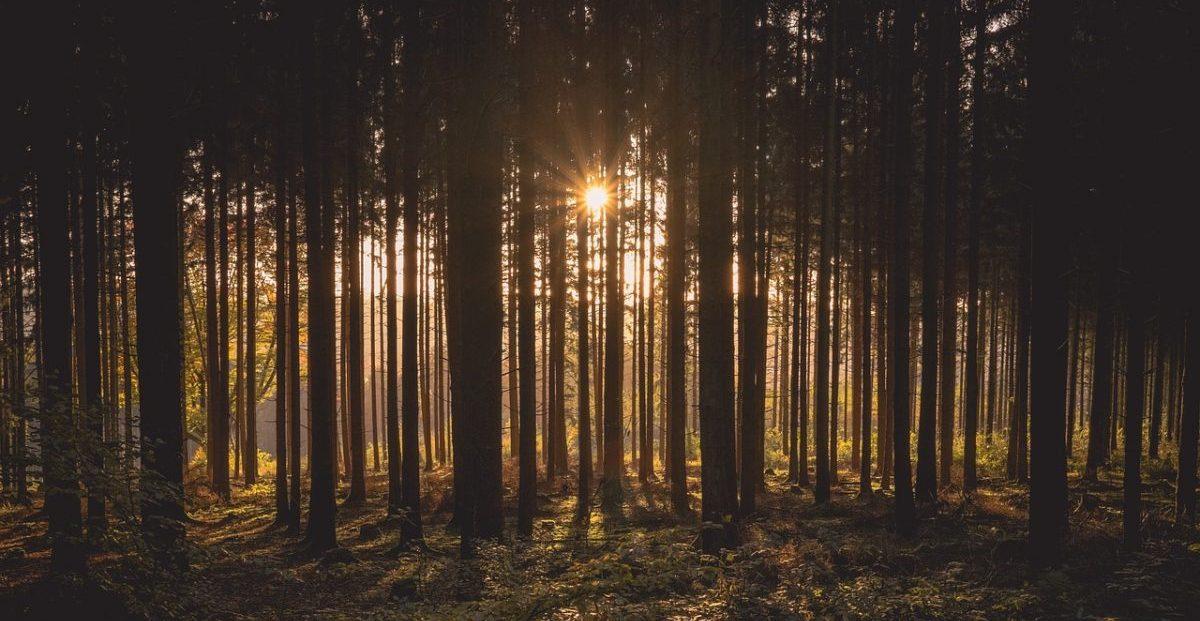 Drvo zgusnuto novom metodom je jako kao čelik, ali šest puta lakše